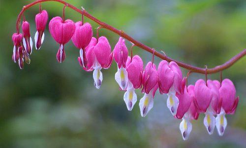 زیباترین_گل_طبیعی_4